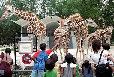 opinion maintenance of zoos morally indefensible